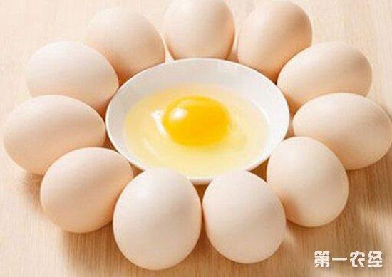 老井:未来蛋价市场有明显的利好因素