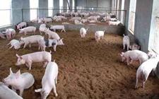 <b>多地非洲猪瘟疫区解除封锁,猪瘟不影响食品安全可放心</b>