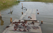 怎样进行小龙虾的饲养?小龙虾饲养管理技术