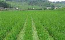 宁夏推广扩大农业保险覆盖面 提高农业抗风险能力
