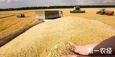 今日大豆、玉米、水稻、小麦等粮食收购价行情