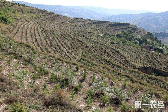 三北工程四十年累计造林三千万公顷 有效构筑农业生态屏障