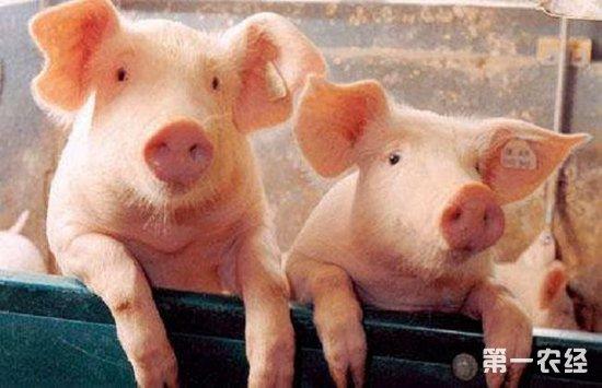 猪口蹄疫有哪些症状?要如何进行防控?