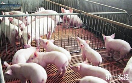 育肥猪厌食要怎么种?育肥猪厌食的预防措施