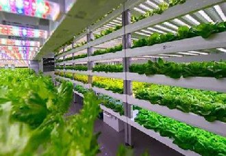 <b>没有阳光和土壤也能种出菜?植物工厂是怎么做到的?</b>