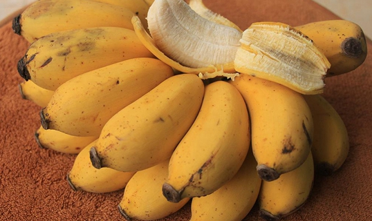 粉蕉要怎么种?粉蕉的种植技术