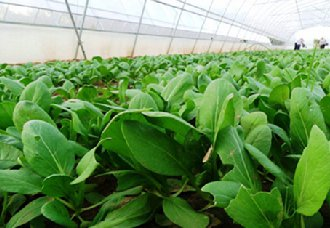 <b>贵州南州:种植130万亩蔬菜 打响扶贫硬仗</b>