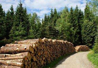 甘肃酒泉市大力推进林业生态保护与建设 国土绿化任务将全面完成