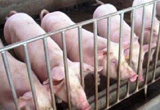 <b>辽宁北镇疫区解封,北京通州发现非洲猪瘟疫情</b>