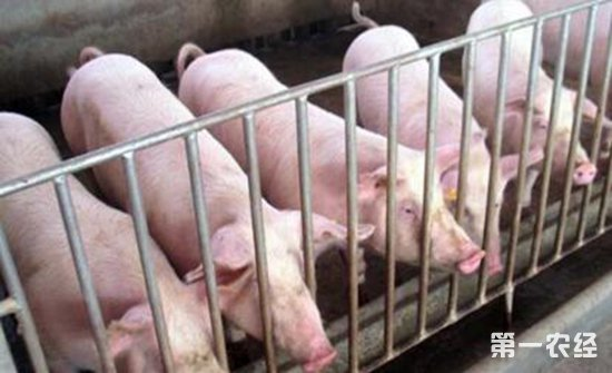 辽宁北镇疫区解封,北京通州发现非洲猪瘟疫情