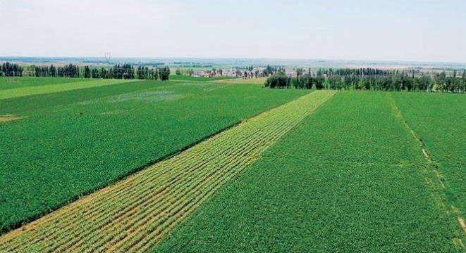 """5.6亿亩高标准农田如何建成?""""智慧""""成为农田新底色"""