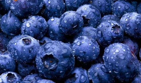 蓝莓要怎么防寒?蓝莓的越冬防寒技术