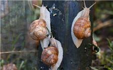 澳门永利娱乐网址蜗牛时常见的疾病有哪些?如何防治