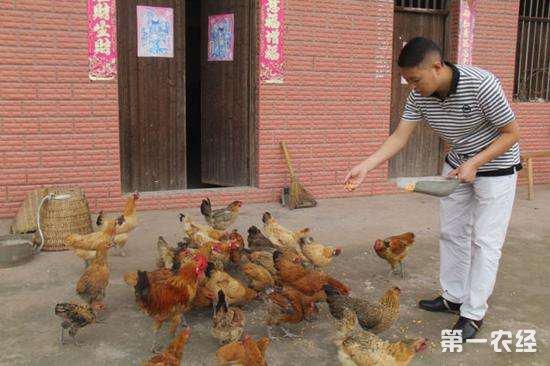 鸡群出现大面积拉稀的情况是什么原因?检查是否有这几种情况