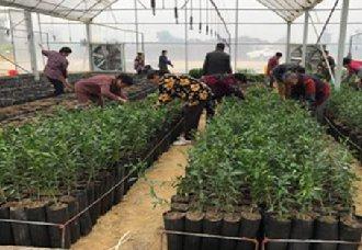 重庆潼南:首个柠檬脱毒育苗中心已建成