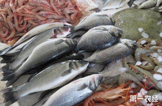 山东威海:鲜鱼价格低位运行 梭子蟹价格小幅升温