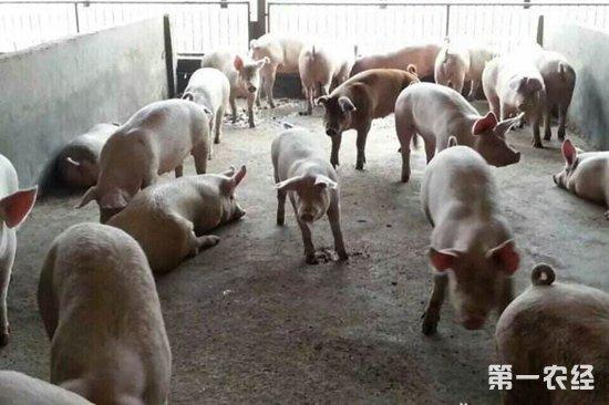 虚构养猪项目骗取扶贫资金27万,被依法刑事拘留