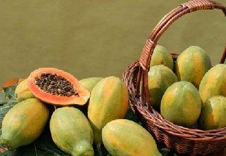 <b>番木瓜常见的病害以及防治措施</b>