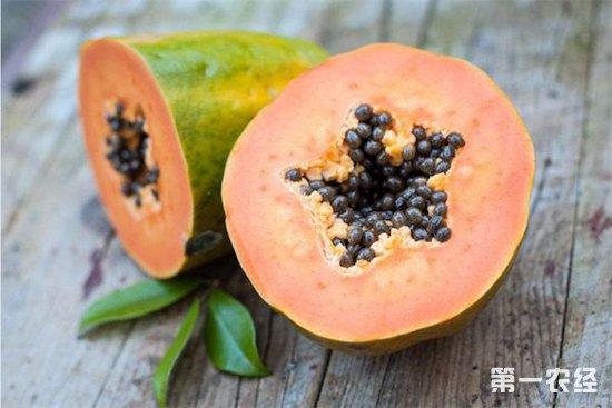 番木瓜常见的病害以及防治措施