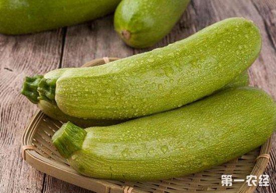 西葫芦化瓜的原因以及解决措施