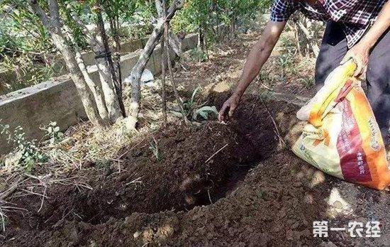 果树常见的四种施肥方法