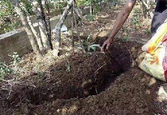 果树要怎么施肥?果树常见的施肥方法