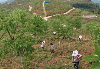 湖南道县:林业与扶贫相结合 大力推进生态扶贫工作