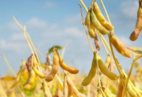 黑龙江大豆产业受各省市大力扶持 加快发展速度