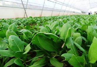 吉林长春双阳区大力发展绿色产业 成为绿色产品主要供给地