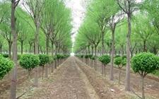 广东省计划每年建设1600个森林乡村 正式实施绿美南粤三年行动计划