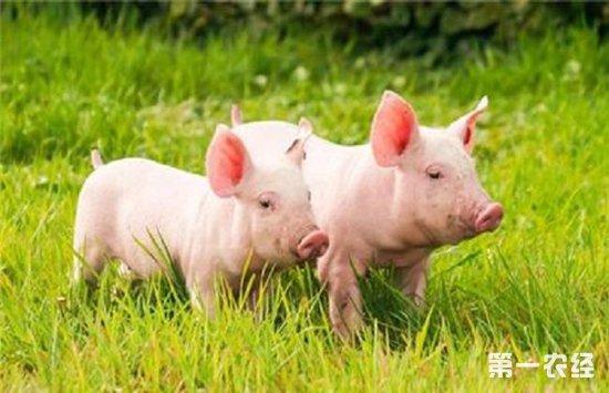北方猪价再次下跌,南北猪价呈冰火两重天状态