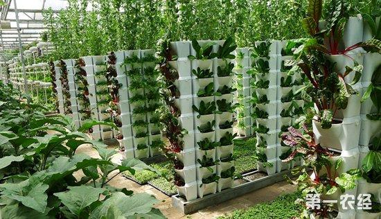 节能、降耗、减排,智慧玻璃温室效益高