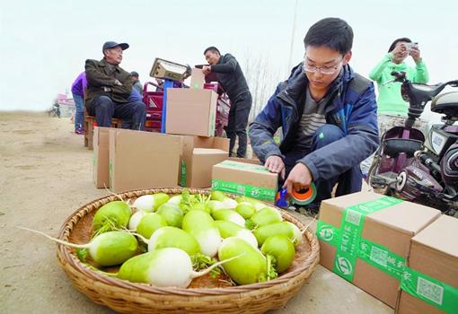 河南商城周寨:开展萝卜文化节 让200多万斤萝卜不再滞销