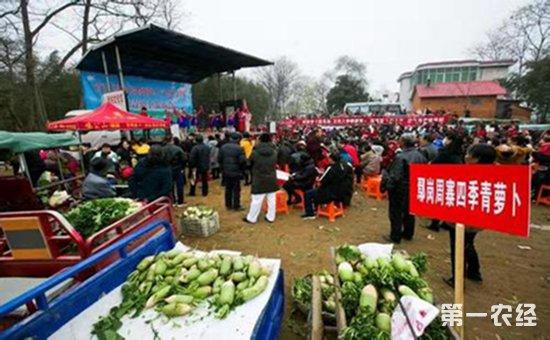 萝卜文化节