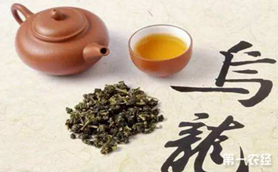 以上就是有关乌龙茶的知识介绍。乌龙茶是可以用紫砂壶来进行冲泡的,但是用紫砂壶需要进行洗茶,壶身经过热水的浇灌,才能唤醒紫砂壶。用紫砂壶冲泡乌龙茶,投茶量也要根据壶身的大小来决定。紫砂壶冲泡乌龙茶的时间要保持在3分钟左右,这样茶叶中所含的营养物质以及香气可以更能发挥出来。