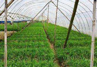 甘肃漳县:大力发展大棚蔬菜产业 全县蔬菜总面积达10.62万亩