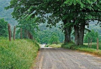 我国在2020年将实现乡村绿化覆盖率达到30%