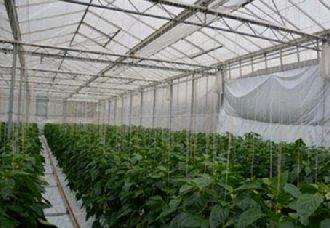<b>荷兰:凭温室种植技术成为农业大国</b>
