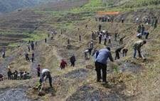 广西森林覆盖率达62.31% 超过1500万农民因林受益