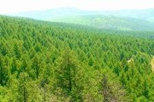 林科教育如何创新求变?如何更好地服务林业发展?