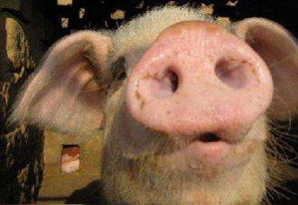 猪泪斑形成的原因是什么?要怎么消除?