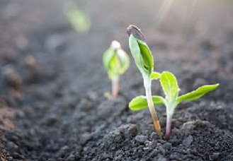 中国特色的土壤修复体系呼之欲出