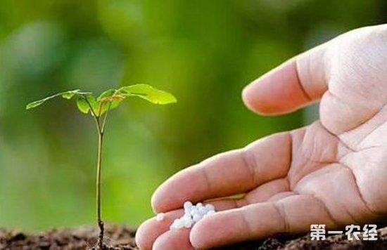 花肥要怎么施?家庭花卉种植中常见的误区