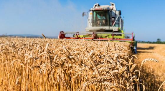 俄罗斯:将扩大出口规模把更多农产品供应到世界市场