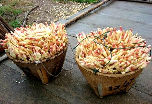 江西:几十万公斤黄老门生姜遭滞销