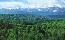 中国林业产业发展现状和前景趋势分析