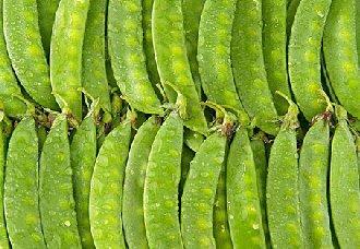 荷兰豆怎么种?种植荷兰豆的注意事项