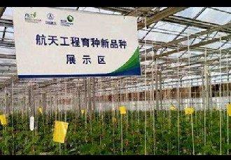 中国航天育种产业取得令人瞩目的成绩