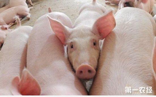 春秋两季是生猪寄生虫疾病的高发期。 这主要是由于在这两个季节温度等条件适宜寄生虫生长繁殖。 春季由于天气回暖,虫卵相继孵化成为幼虫,而在秋季很多动物开始进行繁殖,需要大量的营养消耗。 因此在这两个季节,生猪寄生虫疾病发生几率较高。 要实现对生猪寄生虫疾病防控效果的提高首先就必须做好对虫卵和幼虫的杀灭工作,强化驱虫效果。 一般情况下,仔猪由于抵抗力较弱,是寄生虫疾病侵袭的主要对象。 因此,在仔猪出生后的1个月至 40d 之内就要进行第 1 次驱虫。 同时要制定专门的驱虫计划,基本上每2个月就要进行1次驱