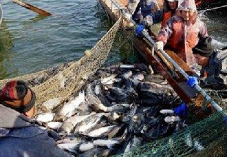 2019年1月1日起将实行修订后的《渔业捕捞许可管理规定》